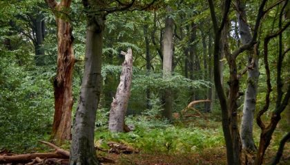 Green Event – Projekt der Wald